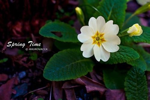 SpringTime by maurovacca