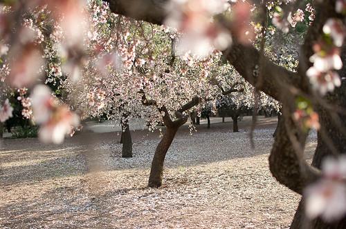El Parque de la Quinta de los Molinos y sus almendros en flor
