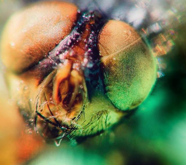 Fly eyes | Flickr - Photo Sharing! Fly Eyes