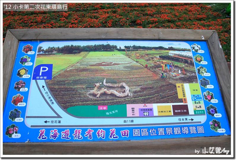 台東花海台東成功花海IMG_0980