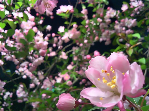 Photo:IMG_5927 By:coloredby