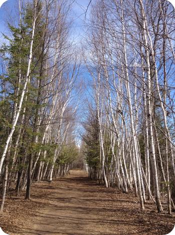 trees, Lime Kiln Trail