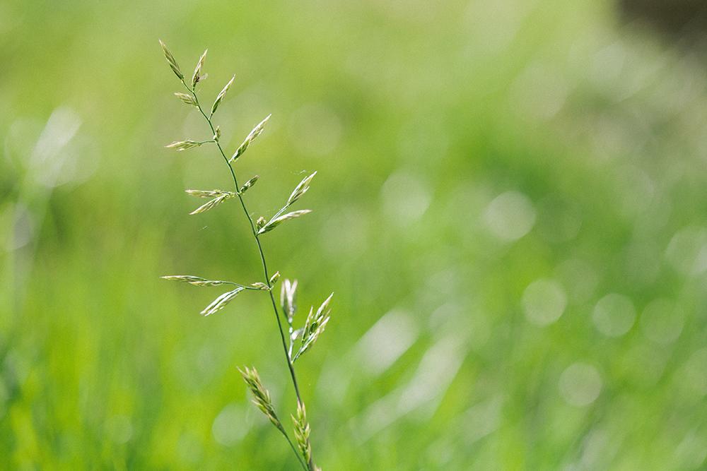 weeds_web
