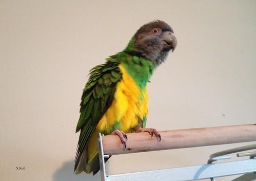 Ptak and Maverick's Arrival 043