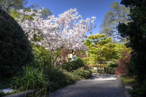 hakonegardens saratoga california sakura japanesegarden garden hdr 3xp raw nex6 photomatix fav50 siliconvalley sanfranciscobay