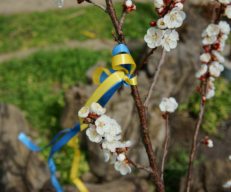 Ukrainian Blossom