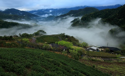 travel pink light mountain color fog comfortable night clouds creek sunrise canon relax landscape dawn spring view cloudy vibrant taiwan trails fresh valley rails rays nightview dawning 夜景 idyllic teagarden 風景 daybreak hillwood seaofclouds vigor 雲海 晨曦 pinglin 日出 vitality 耶穌光 茶園 landscapephotography colortemperature teaplantations 坪林 霧 energetic 清晨 teafield 北勢溪 雲霧 山景 ruralscenery 山谷 芒花 晨景 嵐 晨昏 山色 南山寺 色溫 霞光 彩霞 車軌 風景攝影 台灣風景 vehicletrack 新北市 newtaipeicity 朝氣 晨霞 谷景 樟空子 舒爽