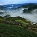 繚繞 Wind around ~ Dawn and  Sea of clouds of Tea Garden @ 坪林 Pinglin  ~