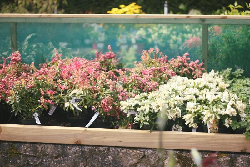 plant shop altamont garden