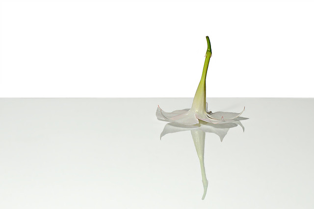 reflection (brescia, italy)