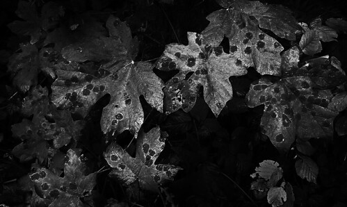 leaves by Nature Morte