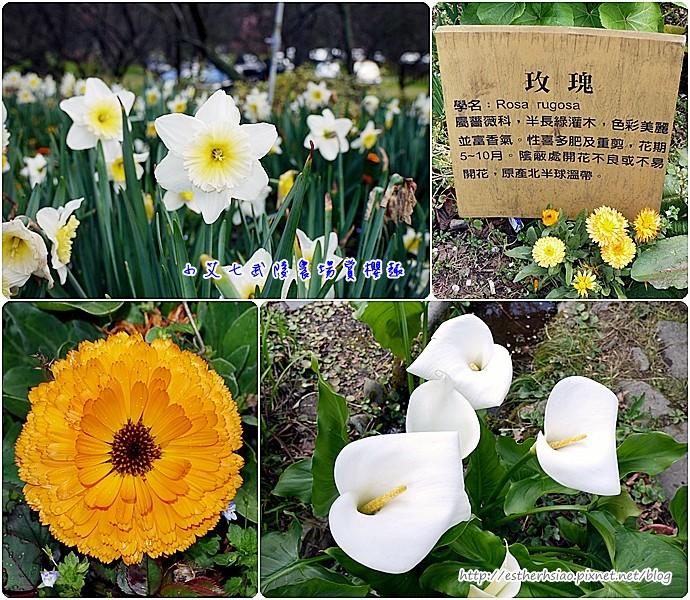 20 櫻花以外的其他花