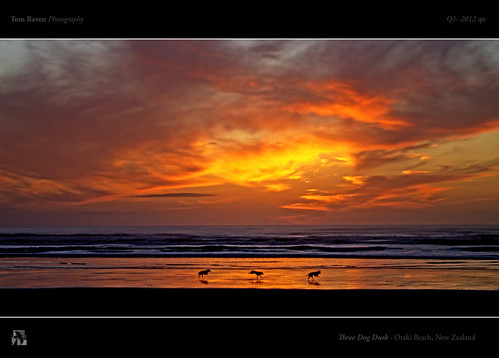 Three Dog Dusk by TomRaven