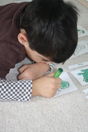 Frog Anatomy Work (Photo from Montessori MOMents)