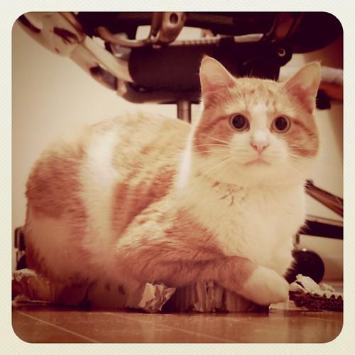 Meet the street cat