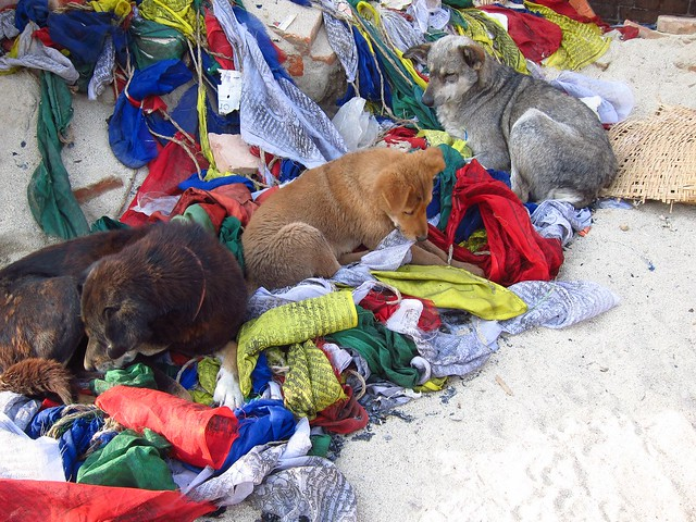 Dogs with Prayer Flags at Swayambhu