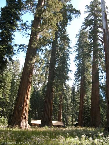 Museum in the Mariposa Grove, Yosemite National Park, California