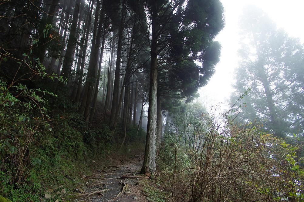 觀霧巨木步道-034