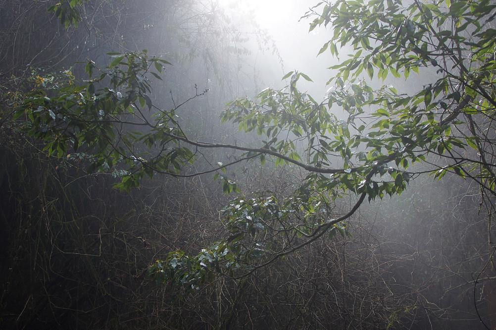 觀霧巨木步道-069
