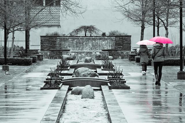 Umbrellas in Emery Barnes Park