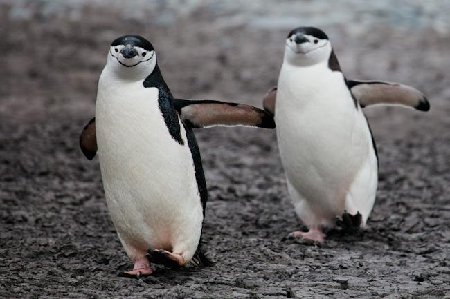 antarctica-blog-18
