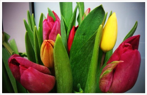Beautiful tulips from my siblings! Love you guys.