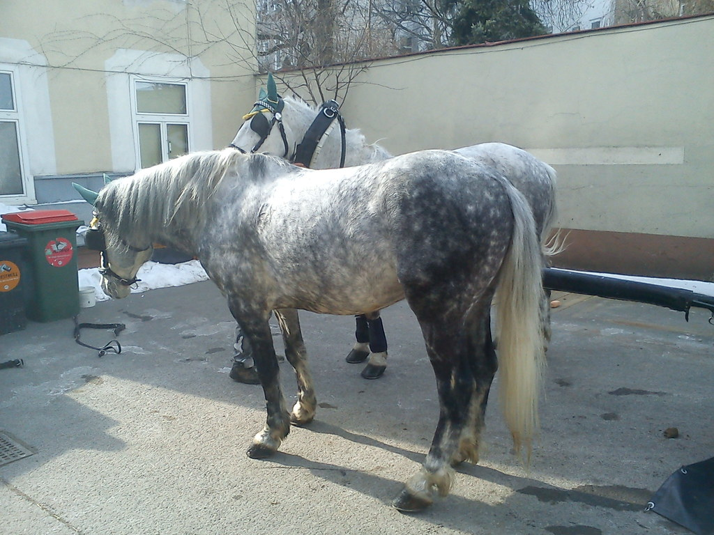 8 Pferde im Hinterhof : )