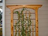 Narrow cedar and copper trellis