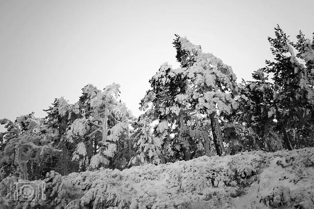 Invierno en blanco y negro