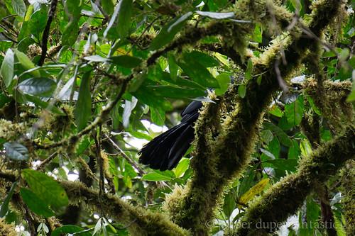 Santa Elena Cloud Forest Reserve - Monteverde
