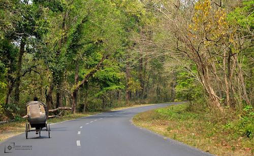 Gorumara,Jalpaiguri