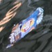 Small photo of Lays