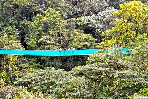 hanging bridges canopy walk arenal la fortuna costa rica