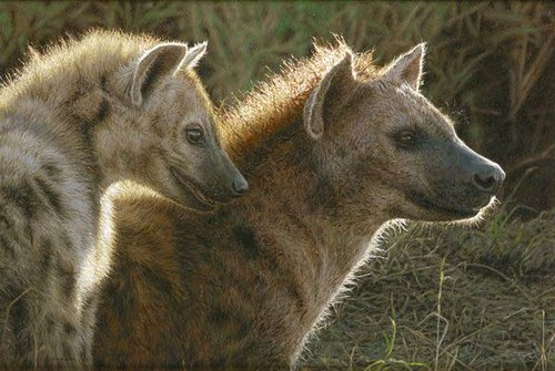 "'Hyenas' oil on board 13½"" x 20"""