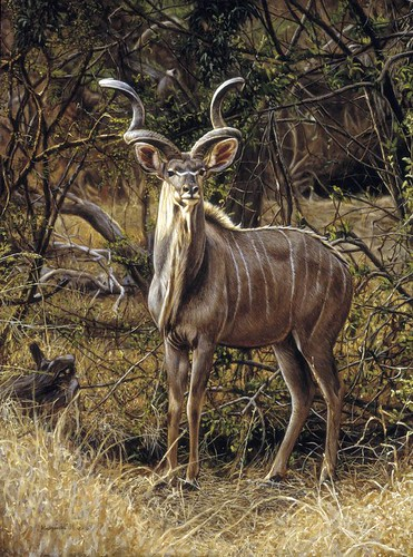 "'Kudu bull' oil on board 16¼"" x 12"