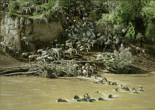 "'The Great Migration' oil on board 37"" x 51"""