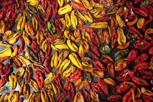 Locoto boliviano - bolivian chili