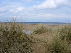 steppe(0.0), field(0.0), reservoir(0.0), lake(0.0), wind(0.0), dune(0.0), salt marsh(0.0), bog(0.0), wetland(1.0), prairie(1.0), horizon(1.0), beach(1.0), sand(1.0), grass(1.0), sea(1.0), natural environment(1.0), phragmites(1.0), shore(1.0), landscape(1.0), coast(1.0), rural area(1.0), grassland(1.0), marsh(1.0),