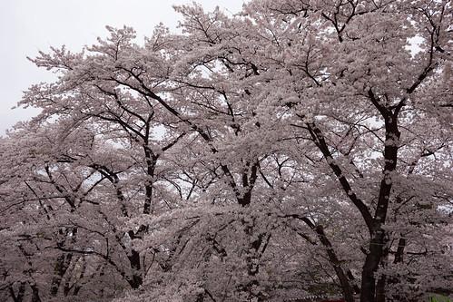 AKG_2012-04-21_030