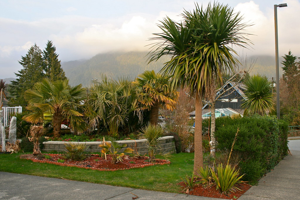 Palm Trees That Grow On Vancouver Island