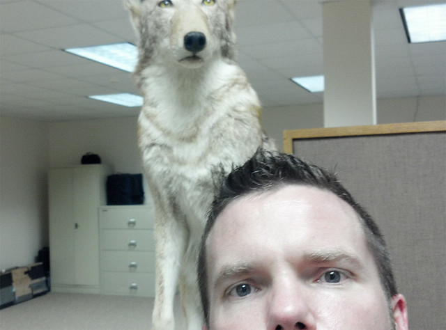 Coyote and me