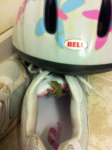 Anole in the Shoe