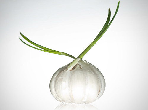 garlic by petetaylor