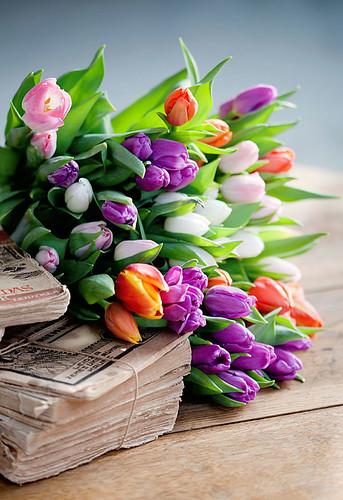 Tulip ♥