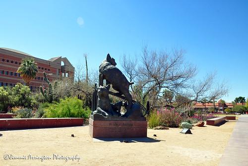 Wildcats Statue