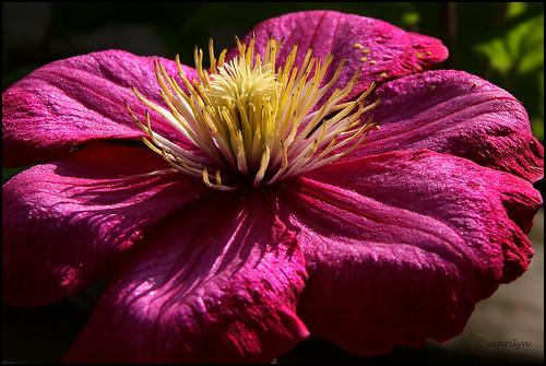 Sunny flower by Marilyn's foto's