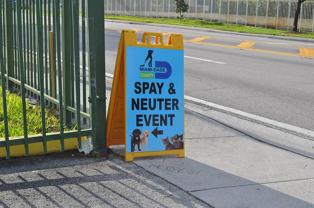 Miami Dade Animal Shelter Adopted Dogs