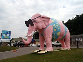 If you see a pink elephant in a bikini...