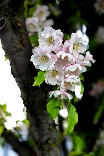 It's a Bloomin' Tree 2
