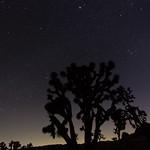 Stars of Joshua Tree NP